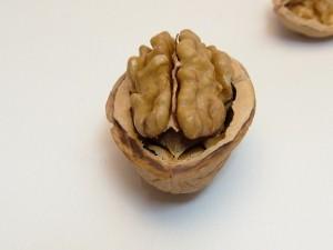 nuez que parece un cerebro